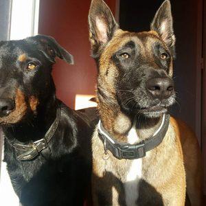 Garde de chien à domicile